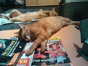 Mes chats me désespère ! IMG_20120407_224920-300x225